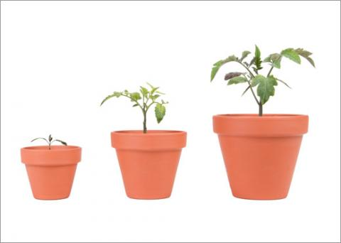 Three sizes of plants representing company size