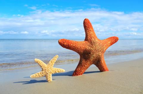 Two starfish, large and small, standing upright in the sand on the beach.