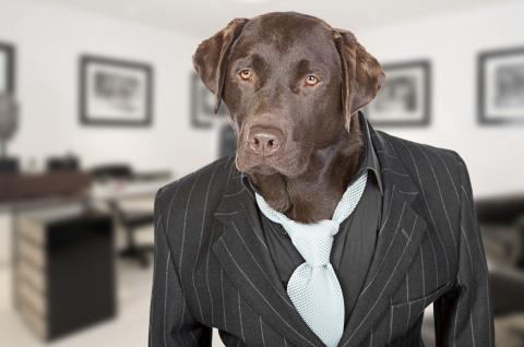 dog in a business suit