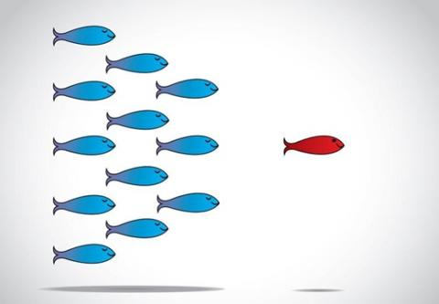 Illustration of a red fish leading a school of blue fish.